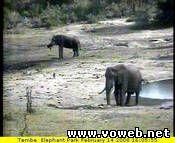 Веб камера - Самые большие слоны в мире.