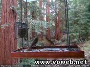 Веб камера - США, Кормушка для птиц