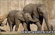 Веб камера - Слоны , видео веб камера