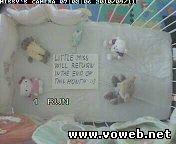 Веб камера показывает кроватку Missy`s (Чехия, Прага)
